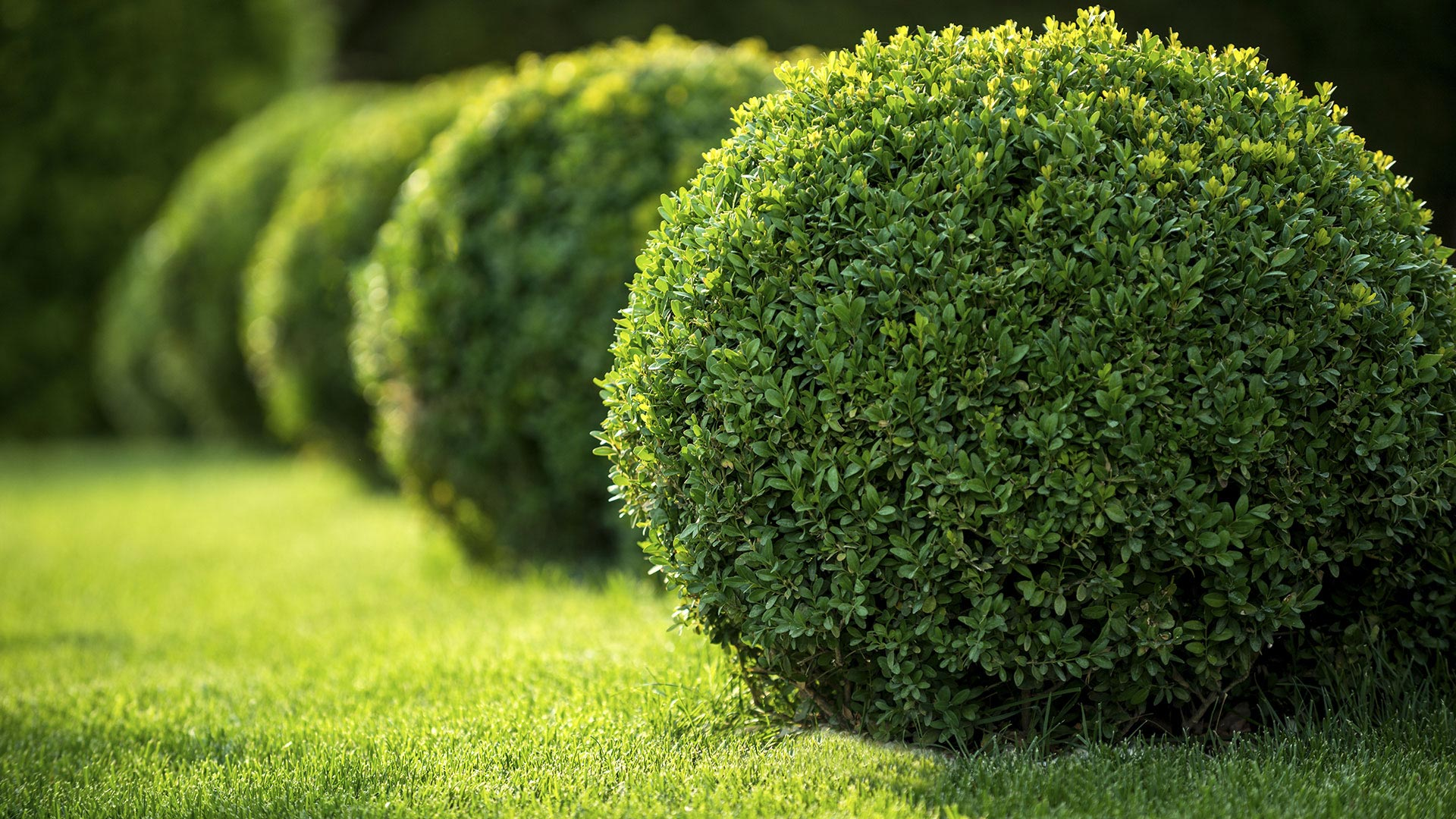 Naarden Inc. Professional Gardening, Landscaping and Pruning of Shrubs and Hedges slide 1